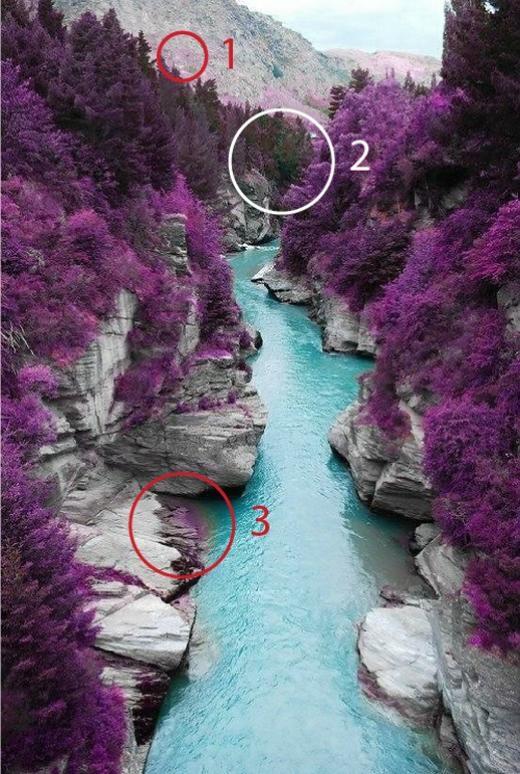 Con suối với hàng cây màu tím này được giới thiệu là ở Fairy Pools, Scotland. Nhưng thực chất... (Ảnh: Internet)