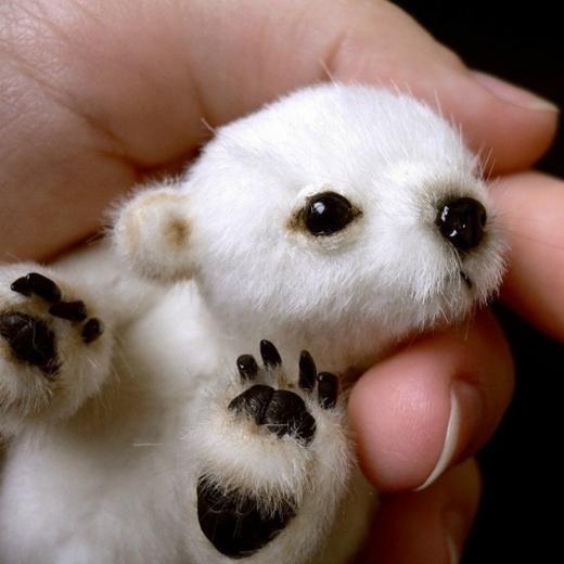 """Nhiều người chia sẻ hình ảnh với chú thích """"đây là chú gấu Bắc cực con dễ thương"""". Thế nhưng, nó chỉ là gấu nhồi bông mà thôi. (Ảnh: Internet)"""
