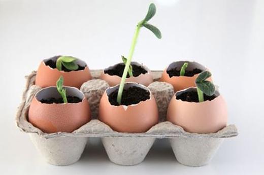 """Giữ lại khay đựng trứng và sử dụng như một """"vườn cây"""" di động.(Ảnh: Internet)"""