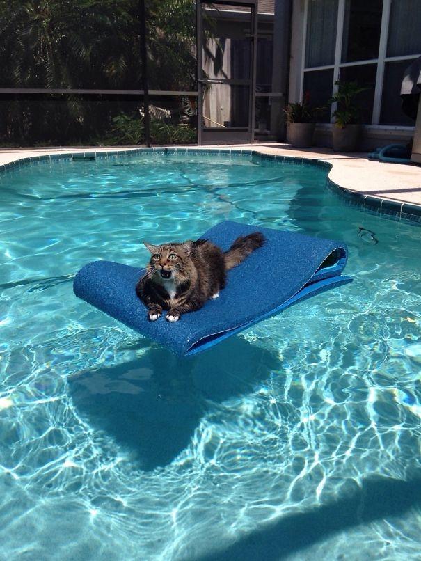 Rồi bây giờ làm sao bơi vô?(Ảnh: Bored Panda)