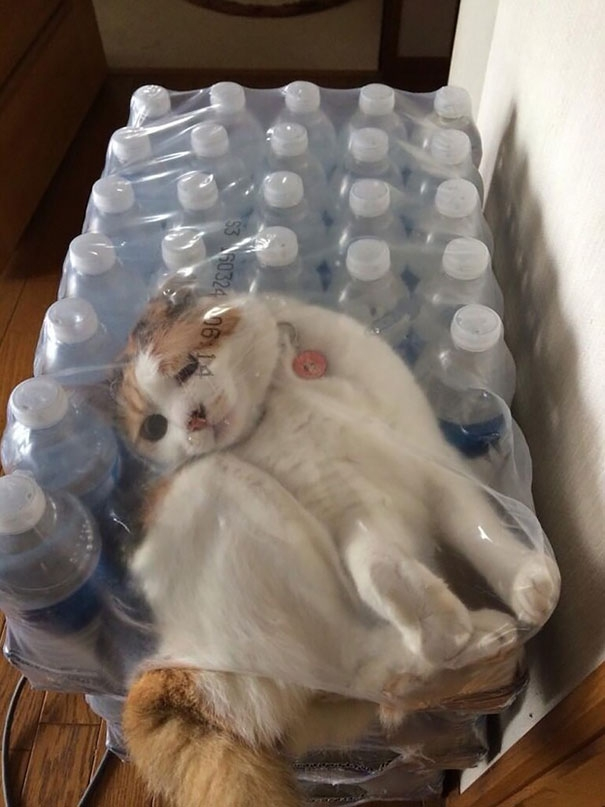 """Hạn sử dụng của """"mèo đóng gói"""" là mấy năm kể từ ngày sản xuất?(Ảnh: Bored Panda)"""
