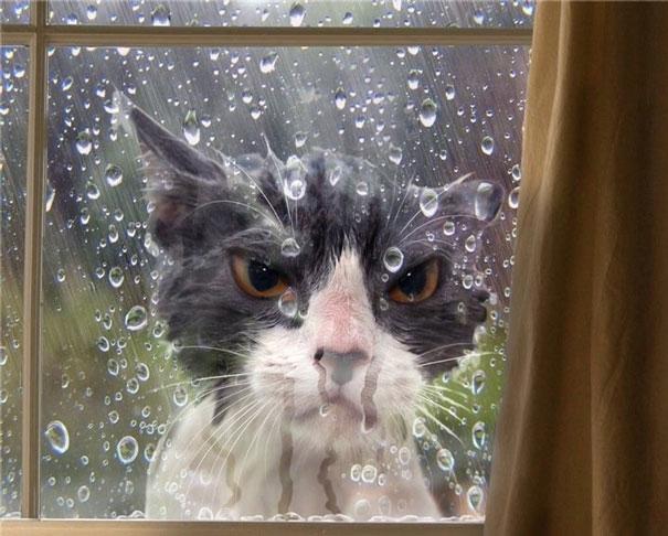 """""""Nhìn người khác bị mắc mưa không phải là thú tiêu khiển của kẻ quân tử đâu nhé!"""".(Ảnh: Bored Panda)"""