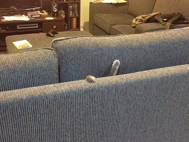 """""""Ai cứu với, cái ghế nó đang nuốt tôi này!"""".(Ảnh: Bored Panda)"""