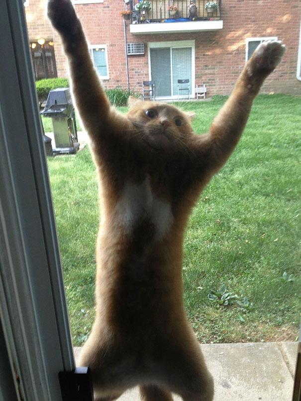 """""""Bớ làng nước ơi, mở cửa mau, thằng cún nhà hàng xóm dí tới đuôi tôi rồi!"""".(Ảnh: Bored Panda)"""