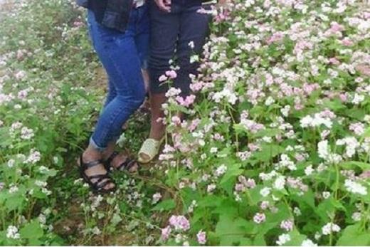 Những luống hoa xinh đẹp nằm rạp dưới chân du khách. (Ảnh: Internet)