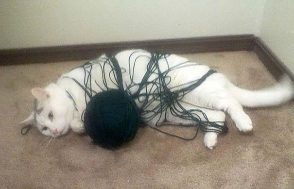 """Sau hàng tiếng đồng hồ vật lộn với cuộn len quỷ quái, """"anh ấy"""" đã chính thức thua cuộc và nằm bẹp dí.(Ảnh: Bored Panda)"""