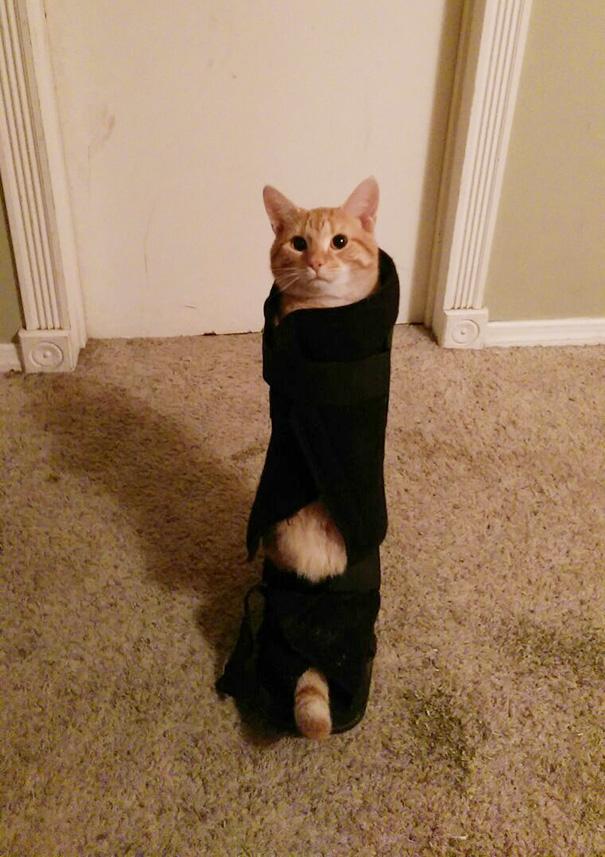 """""""Lũ mèo hoang tấn công và trói tôi lại thế này đây"""".(Ảnh: Bored Panda)"""
