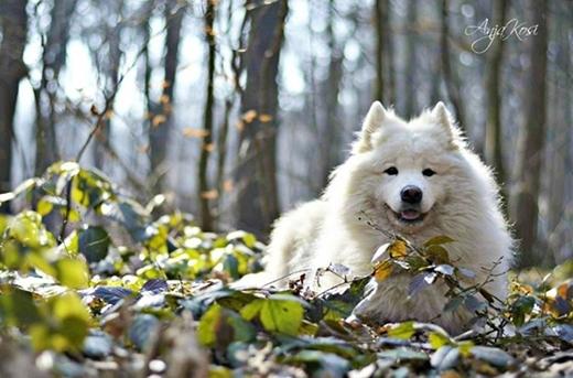 """""""Những con vật ở xung quanh tôi là niềm đam mê, tình yêu và mọi thứ đối với tôi"""".(Nguồn: BP)"""