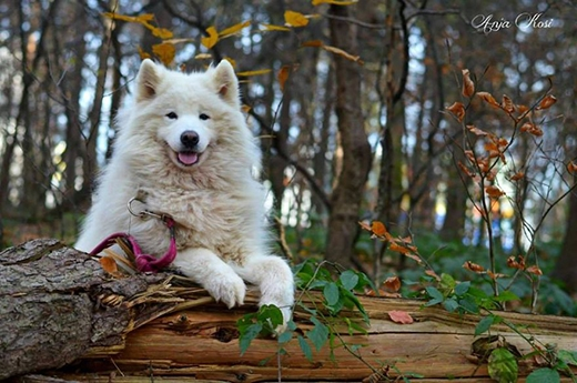 """""""Chú chó - một 'nàng hề' dễ thương và đáng yêu đã đến bên tôi trong lúc tôi gặp bế tắc nhất. 'Cô ấy' làm cho những ngày đen tối của cuộc đời tôi bỗng trở nên sáng ngời hơn"""".(Nguồn: BP)"""