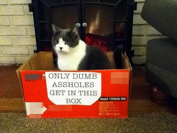 """""""Chỉ có kẻ ngốc mới chui vào cái hộp này"""".(Ảnh: Bored Panda)"""