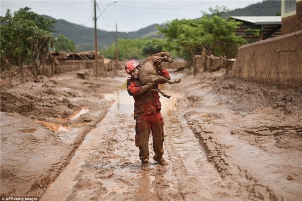 Hình ảnh gây xúc động mạnh trong những ngày kinh hoàng tại Brazil. (Ảnh: Internet)