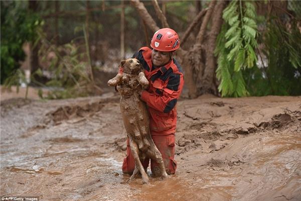 Cứu chú chó giữa dòng bùn độc hại. (Ảnh: Internet)