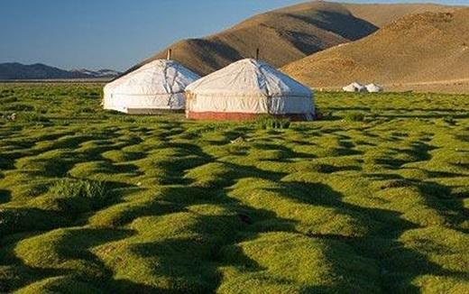 Người Mông Cổ không sống trong nhà mà gìn giữ nét truyền thống bằng cách xây dựng những căn lều được gọi làyurt (tiếng Mông Cổ là ger) và sinh sống qua nhiều năm.(Ảnh: Internet)