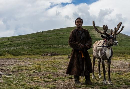 Linh dương là một phương tiện đi lại phổ biến ở Mông Cổ.(Ảnh: Internet)