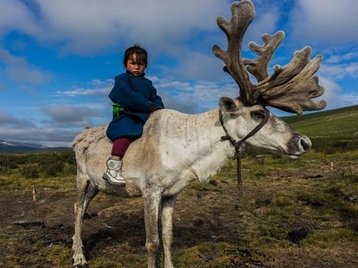 Những em bé Mông Cổ có thể cưỡi linh dương thuần thục một cách đáng ngưỡng mộ.(Ảnh: Internet)