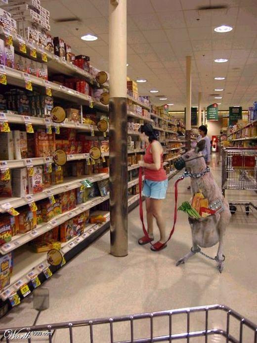 Đi siêu thị không cần giỏ, chỉ cần một chú kangaroo là đủ! (Ảnh: Internet)