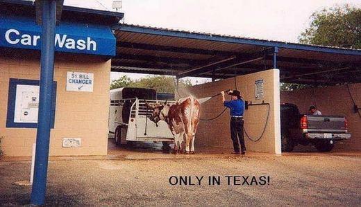 Dịch vụ rửa xe kiêm...rửa ngựa. Có lẽ nó chỉ có ở Texas, Mỹ. (Ảnh: Internet)