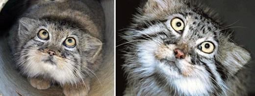 Khi mèo ta rình rập...(Ảnh: Internet)