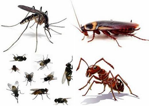 Sự thật không thể tưởng tượng nổi khi côn trùng biến mất