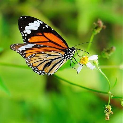 Vai trò quan trọng nhất của côn trùng là thụ phấn. (Ảnh: Internet)