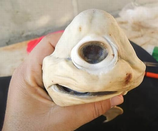 """Nếu nhìn qua, chắc hẳn bạn không biết đây là con gì đúng không? Thực chất đây là cá mập Cyclops cực hiếm, được tìm thấy tại Mexico. Cơ thể chúng khá nhỏ, chỉ dài 56cm. Điểm dễ nhận biết nhất của nó là một mắt duy nhất phía trước. Tên của nó cũng mang nghĩa là """"Thần khổng lồ một mắt"""". (Ảnh: Oddee)"""