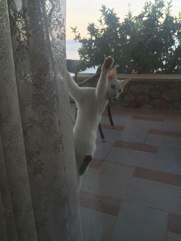 """""""Tóm lại là bây giờ mình đang bị nhốt ở ngoài đúng không?"""". (Ảnh: Bored Panda)"""