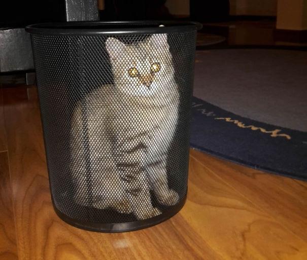 """""""Thật ra anh không có bị kẹt trong cái thùng rác vớ vẩn này đâu. Anh chỉ muốn tạo hiệu ứng là lạ, hay hay cho bức ảnh thôi"""".(Ảnh: Bored Panda)"""