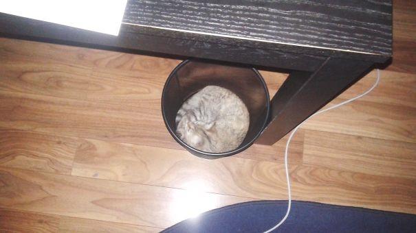 Giấc ngủ tròn đầy trong thùng rác.(Ảnh: Bored Panda)