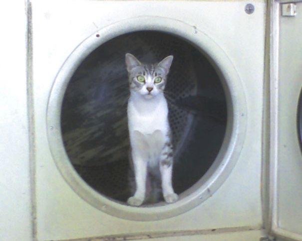 """""""Ồ, thế giới khi nhìn từ ô cửa... máy giặt mới nhiệm màu làm sao!"""".(Ảnh: Bored Panda)"""