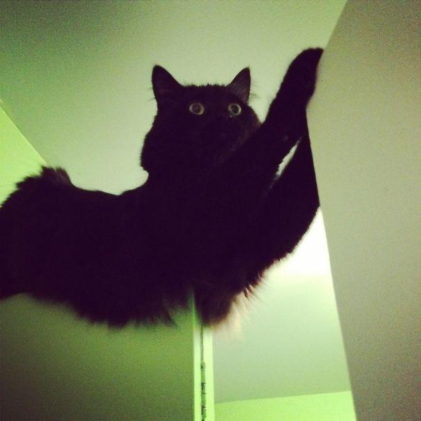 Ngàn cân treo sợi... lông mèo.(Ảnh: Bored Panda)