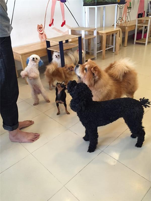Dân mạng tranh luận nảy lửa về câu chuyện 15 chú chó bị đầu độc