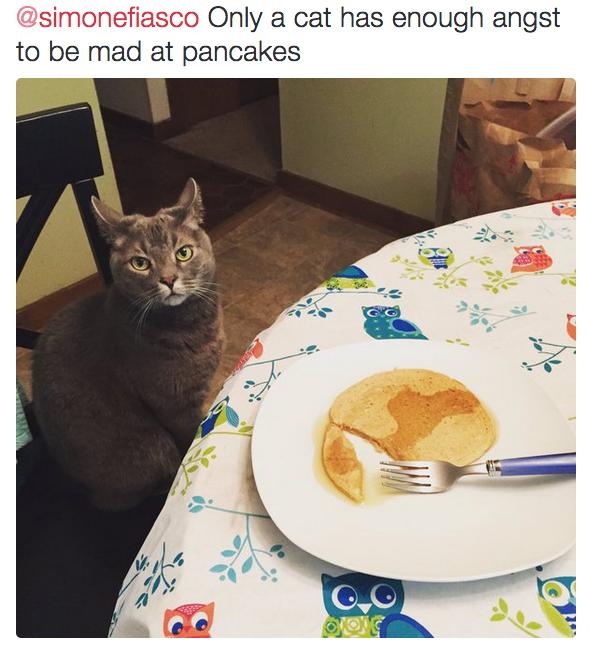 Bạn thích bánh pancake ư? Kệ bạn chứ, loài mèo không thích!(Ảnh: BuzzFeed)
