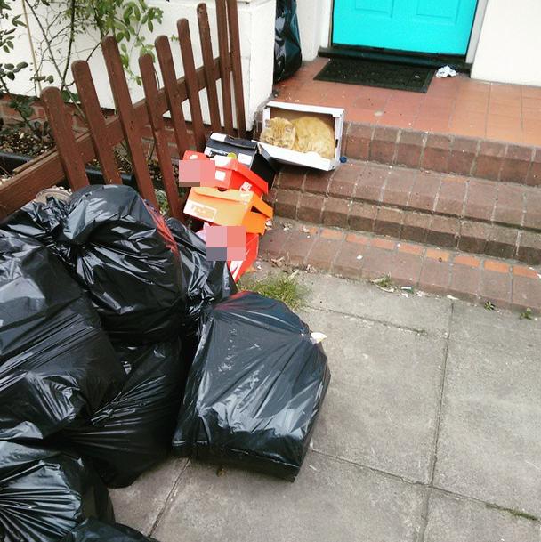 Bãi rác cũng là một nơi lítưởng.(Ảnh: BuzzFeed)