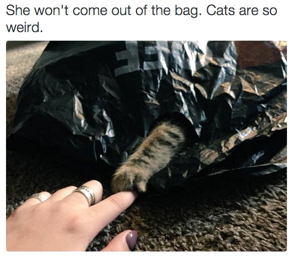 Một ngày nào đó, mèo ta sẽ tạm tránh xathế giới qua chiếc… túi ni lông màu đen!(Ảnh: BuzzFeed)
