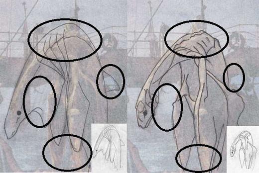 Còn đây là một số đặc điểm trên cơ thể được vẽ lại. (Ảnh: Internet)
