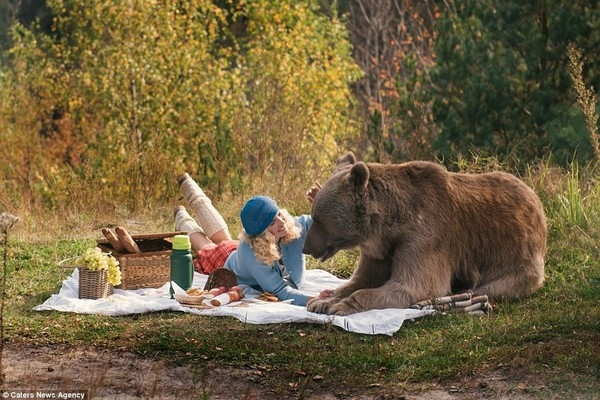 Theo các nguồn tin, chú gấu trong bộ ảnh đã được thuần hóa.