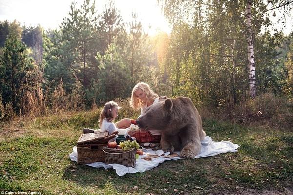 Stepan chưa từng biết đến mùi vị của thịt sống, chú gấu chỉ thích ăn pho-mát và bánh quy cùng hoa quả mà thôi.