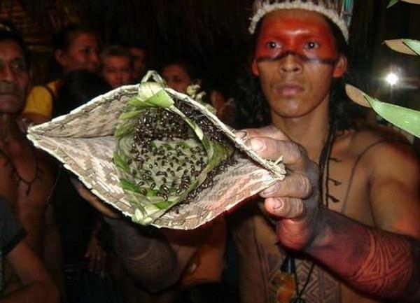 Chiếc bao tay đầy kiến đầu đạn của người Satere-Mawe (Brazil)