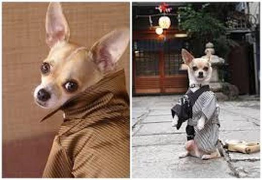 """""""Võ sĩ đạo Samurai chính là ta!"""". (Ảnh: Internet)"""
