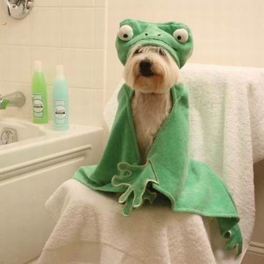 """""""Em là cún chứ không phải ếch đâu!"""". (Ảnh: Internet)"""
