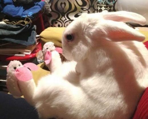 """""""Đã là thỏ thì dép cũng phải hình thỏ!"""". (Ảnh: Internet)"""
