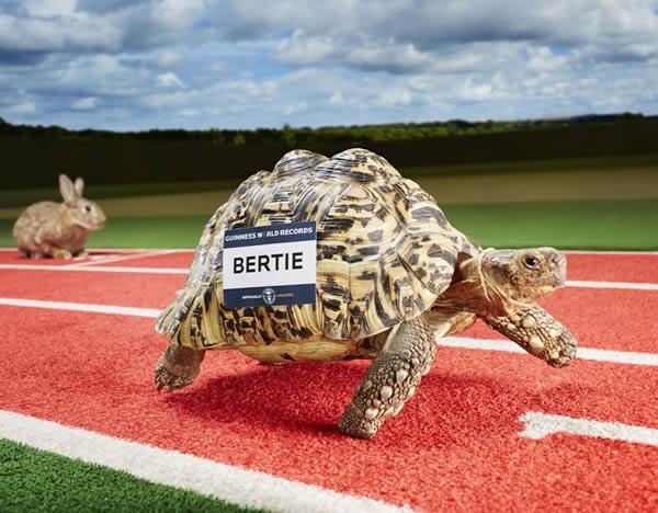 Bertie có tốc độ chạy nhanh gấp đôi rùa bình thường
