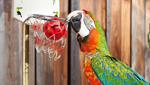 Chú vẹt này rất đa tài trong lĩnh vực thể thao