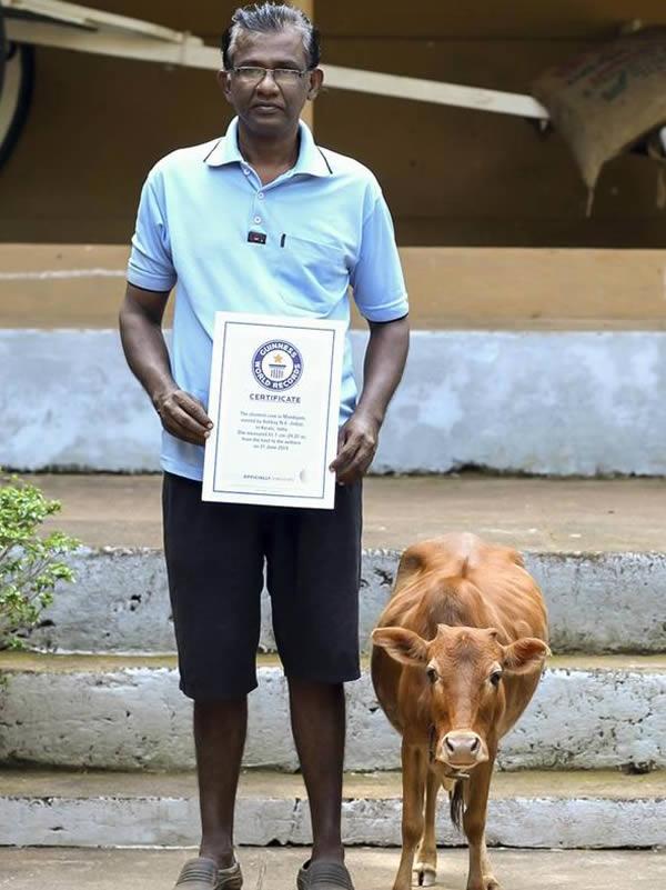 Chú bò cùng chủ nhận bằng kỉ lục