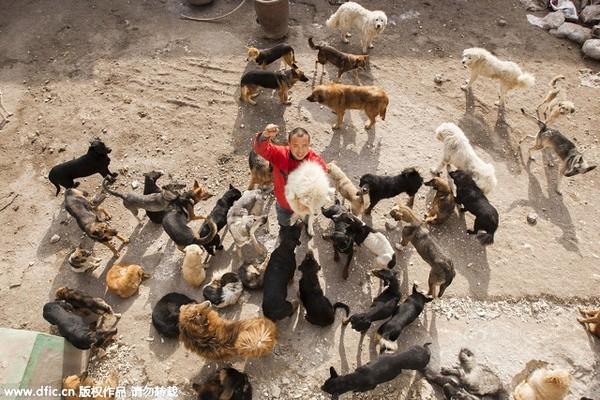 Triệu phú một thời của thành phố Trường Xuân đã mua lại cả một lò mổ và biến nó thành trại cứu trợ chó.