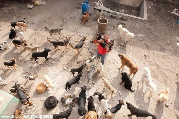 Mới đầu trong lò có tới 1.000 con, đến nay chỉ còn 215 con chưa có chủ mới.