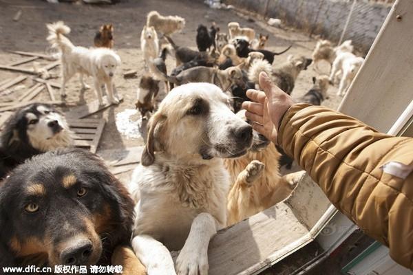 Vấn đề chó hoang hiện đang rất nhức nhối tại các thành phố lớn ở Trung Quốc.