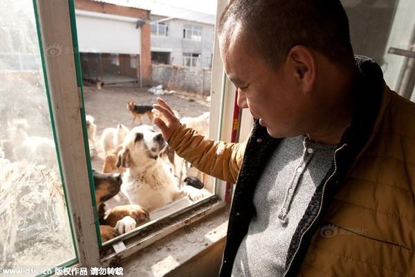 Chính quyền tỉnh Sơn Đông hồi tháng 9 từng đe dọa sẽ giết sạch chó trong khu vực, kể cả thú nuôi của dân để dọn dẹp cảnh quan.