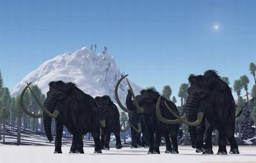 Khoảng 250.000 năm trở về trước,một vùng rộng lớn khắp Bắc Mỹ, Châu Âu và Châu Á được thống trị bởi voi ma mút lông xoăn (Mammuthus primigenius). Nhưng sau đó, số lượng của chúng liên tục giảm, cuối cùng co cụm tại đảo Wrangel, Bắc Băng Dương vào khoảng năm 1700 TCN trước khi biến mất.Theo một nghiên cứu mới vào 2012, có thể biến đổi khí hậu và/hoặc con người săn bắn đã trực tiếp dồn chúng đến bước đường cùng. (Ảnh: Internet)