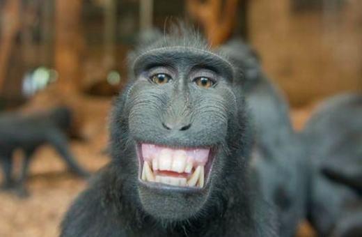 """""""Phải đánh răng mỗi ngày mới có hàm răng chắc khỏe như em nè!"""". (Ảnh: Internet)"""